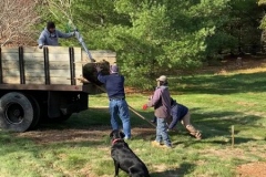 Ginkgo-Tree-Delivery-11-20-19