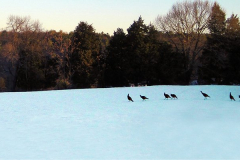 Birds at Snowy BlueView