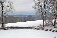 Forest Winter Landscape-2