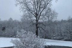 Poplar-Burning-Bush-Winter-4-29-19